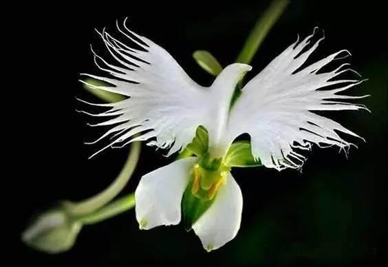 十种奇特的自然界植物