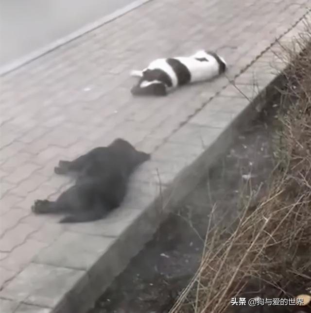 小狗图片,三只狗冻死在街头,正准备给它们收尸的时候…噗哈哈哈