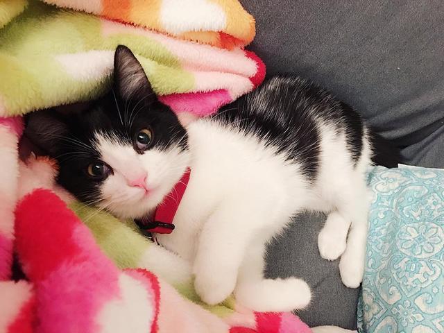 """成语 猫,喵星人中的""""哈士奇"""",你知道是什么猫吗?"""