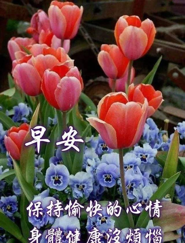 爱的祝福语,天若有情,情亦真;人若有情,感动心,早安