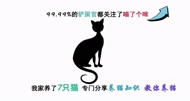粘人的猫品种,新手选猫指南:教你如何挑选到健康又粘人的小猫咪
