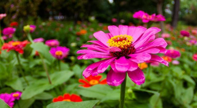 以花写一段话,园中花儿,美如画: