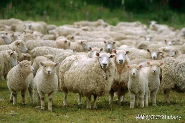 英国怎样剪全球老百姓的羊毛呢?