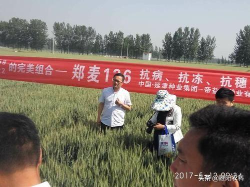 """小麦品种,""""中国第一麦"""",这个小麦新品种超高产、高抗病、优质,名不虚传"""