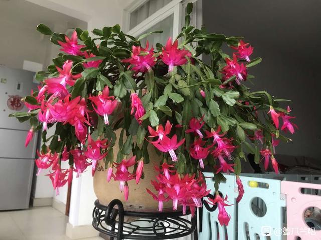分享家庭养花的6个小妙招,养花路上少走弯路,建议收藏