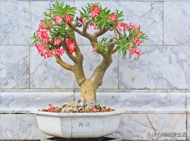 """植物图片大全,3种常见花,好养又漂亮,养成盆景,越""""老""""越值钱"""