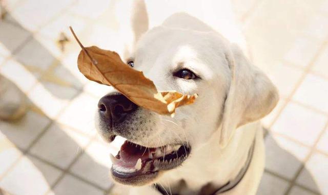 """描写狗的句子,夸赞狗狗有讲究,做好这5点,能让狗狗更""""聪明"""""""