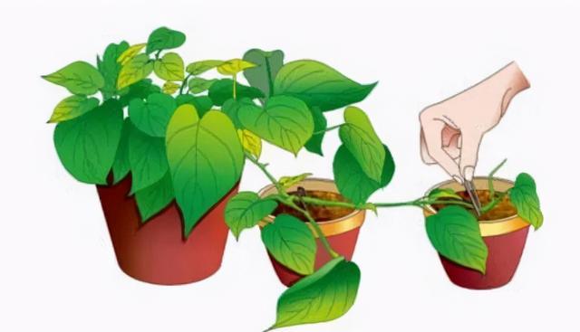 看尽家庭园艺各种繁殖法,为自家花卉繁殖做出正确选择