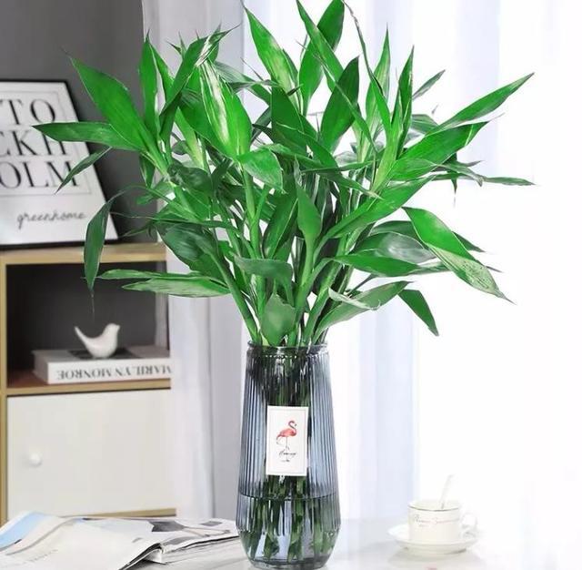 从前不懂:室内养花,选些有寓意的花卉才好