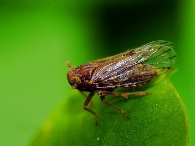虫的漫画,爆笑漫画式的述说,科普虫子的生命特性