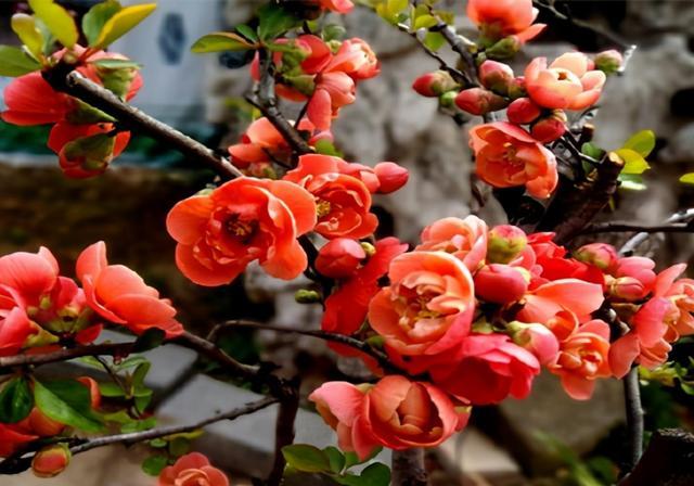 春唯美短句,江南二月,草长莺飞,读一组二月的诗句,欣赏早春的景色
