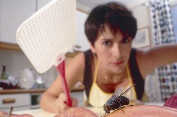 苍蝇图片,为什么用手打不到苍蝇?眨个眼就够它起飞40回了