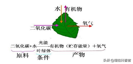 光合作用的意义,光合作用原理:光能转化为生物质能的生化过程