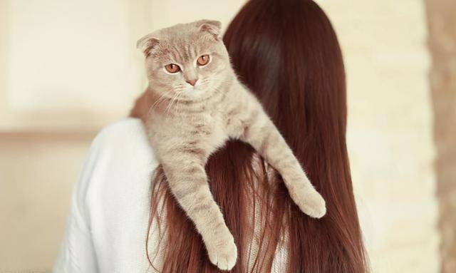 你真的會抱貓嗎?5種常見的抱貓姿勢,但3種都是錯的 家有萌寵 第6张