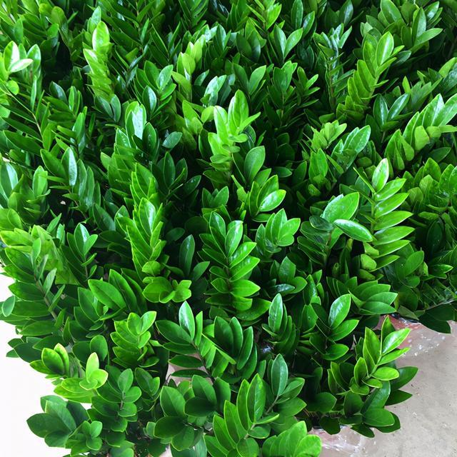 """种寓意好的植物,各有特色,你喜欢哪个?"""""""