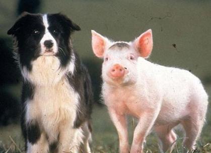 """九的解释,俗语""""二月没九,饿死猪狗""""啥意思?原来和这些人有关"""