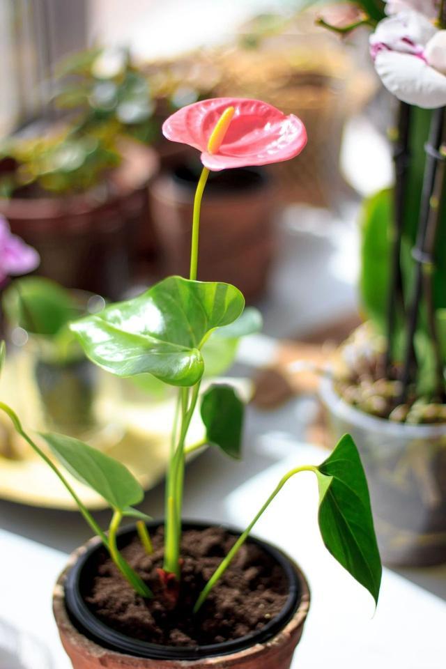 花卉栽培技术,养花七大技巧,真正去提升养花技术,不能靠嘴说,你能做到吗?