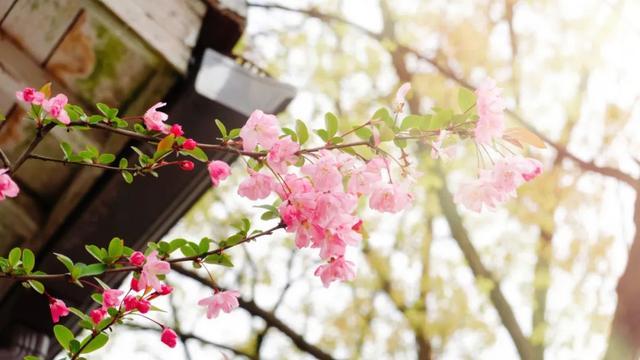 有关春天的诗,6首最美桃花诗词:桃之夭夭,惊艳了整个春天