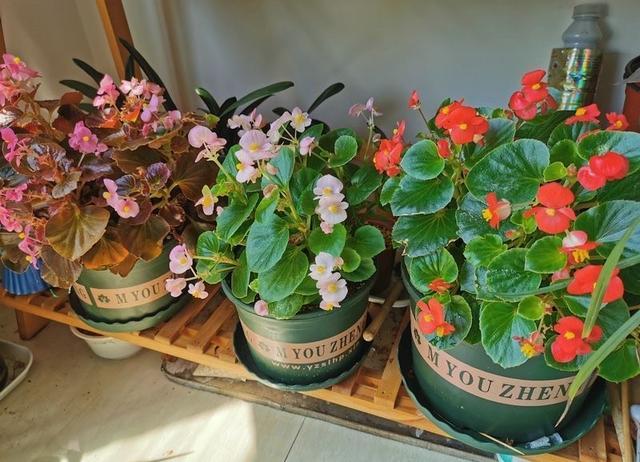"""种""""漂亮花"""",天天被人爱,家里养一盆,365天轮流开"""""""