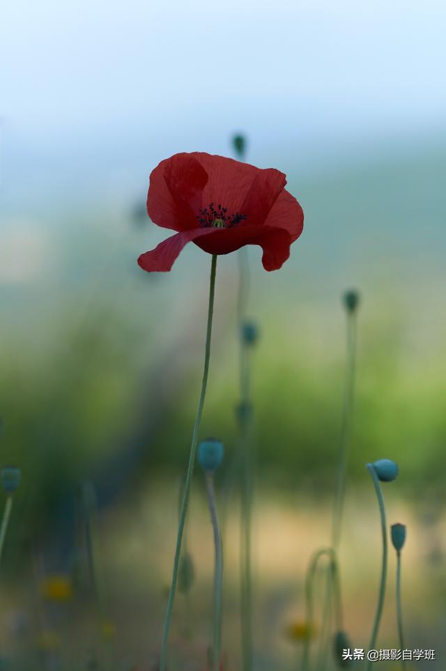 花卉图片,一文学会咋拍花!用22张花卉摄影作品9组对比,帮你随处拍美花