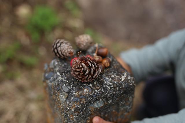 小学生手工简单又漂亮,周末爬山逛公园捡来的松果,带孩子做实验做手工,有创意又涨知识