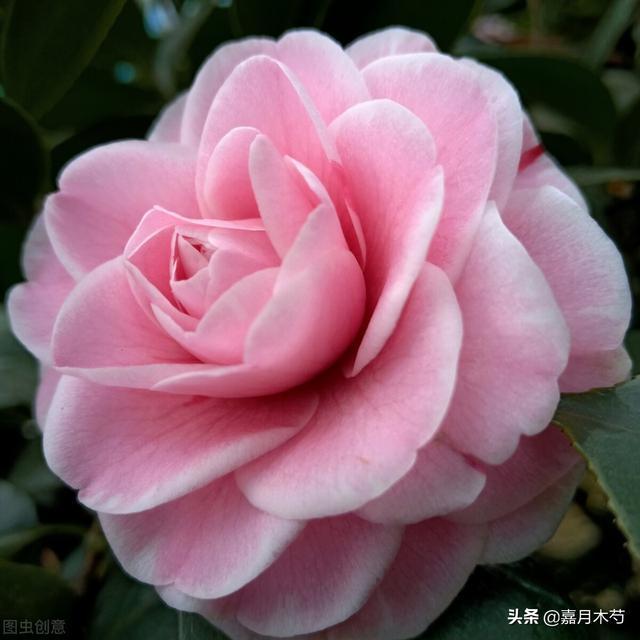 3月24日是什么节日,3月24日崇明花朝节即将开幕