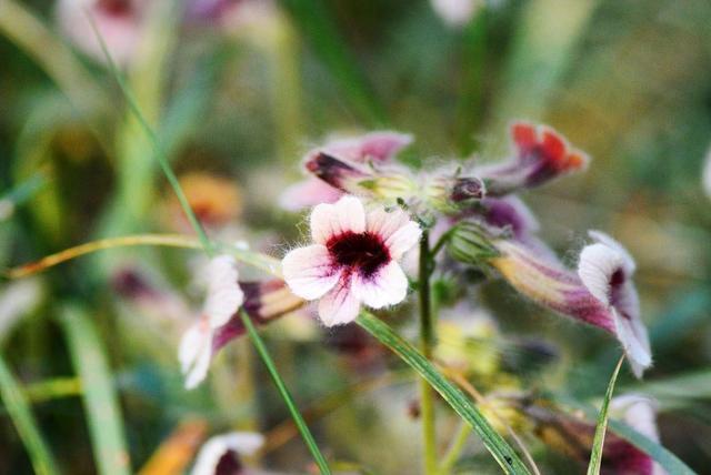 绿植花卉,土豪们喜欢养的5种高价绿植,贵气逼人,养一盆高雅又大气