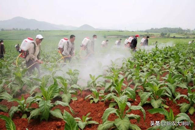 农药品种,农药种类有哪些,主要根据用途、来源及加工剂来分