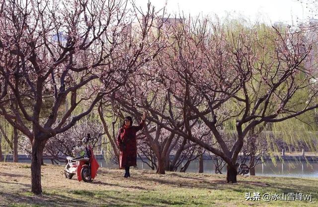 百般红紫斗芳菲的上一句,【散文】这个春季与暖有约