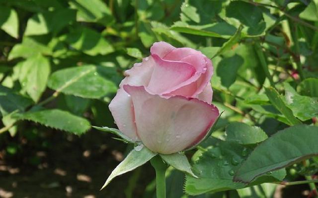 今天心情美美的句子,心情很好的阳光句子,精致有内涵,意义深远