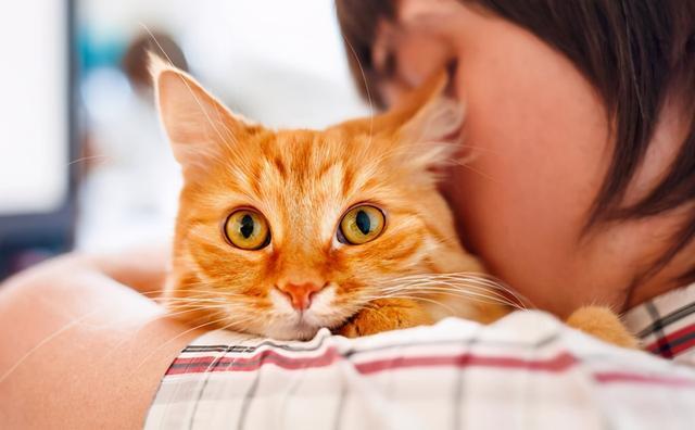 你真的會抱貓嗎?5種常見的抱貓姿勢,但3種都是錯的 家有萌寵 第1张