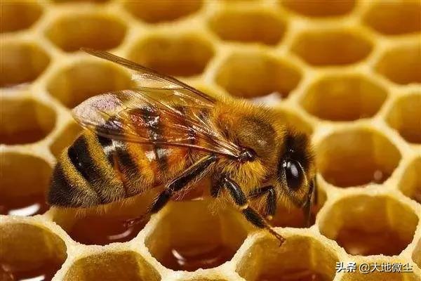 蜂王浆的吃法,蜂王浆,仅仅是贵了一点吗?