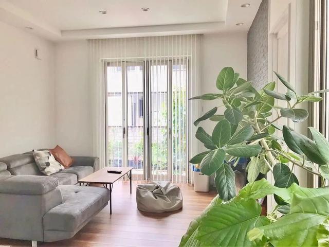 来看看各地花友在家布置的观叶植物,你觉得谁家的最美?