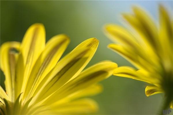 充满阳光的句子,让生活充满阳光的句子,句句正能量