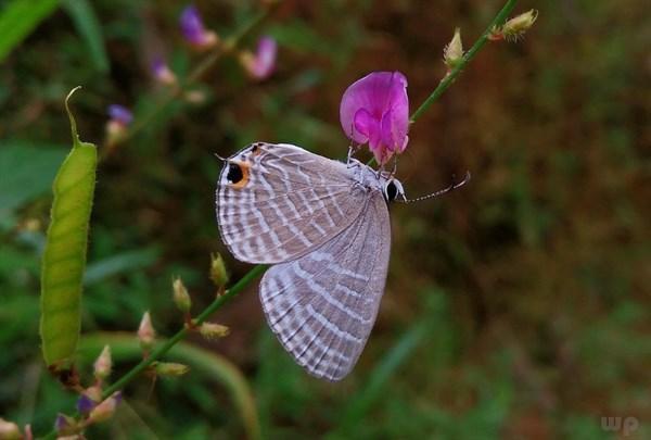 描写蝴蝶的句子,经典句子:你若盛开,蝴蝶自来!你若精彩,天自安排