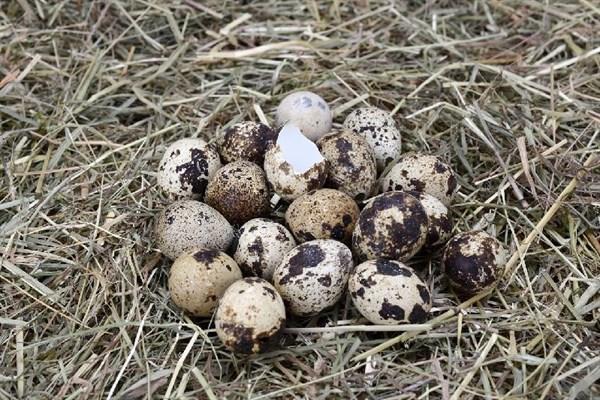 何首乌的正确吃法,它堪称动物人参,比核桃补脑、比鸡蛋养人!小小一颗,滋养全身