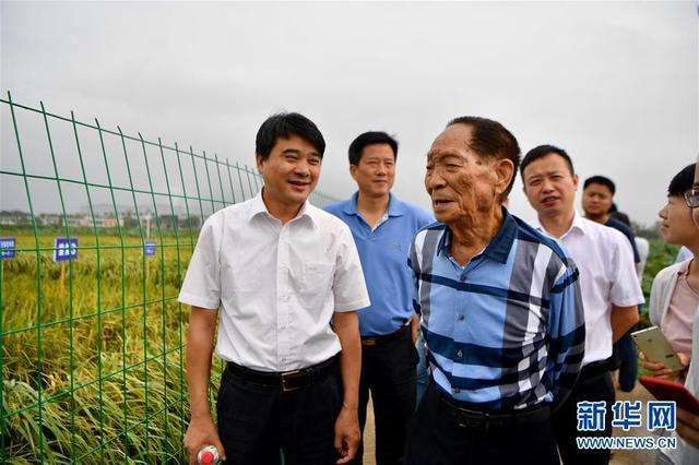 """名人爱国的故事,一颗稻谷里的爱国情怀——记""""杂交水稻之父""""袁隆平"""