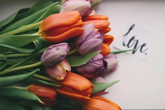 关于宇宙的诗,爱是无边的宇宙   谷川俊太郎最富哲理的爱情诗