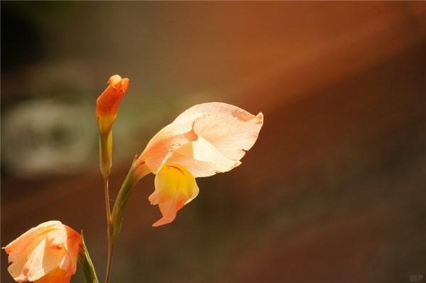 描写心情的句子,经典心情句子:让我越来越成熟的,是经历,而不是岁月