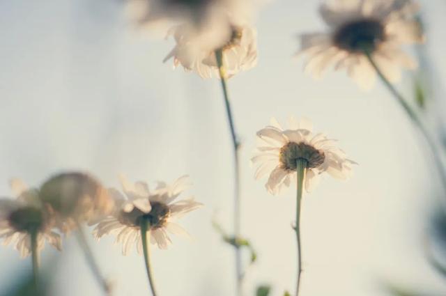 一句温暖的话,10句岁月静好的诗词,一字一句,皆是浪漫