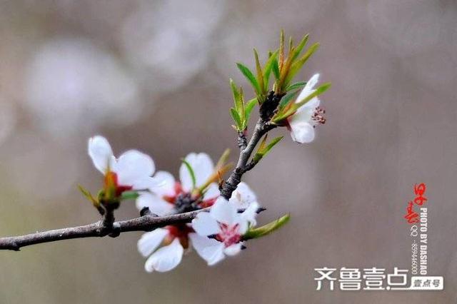 描写时间的句子,「诗歌欣赏」春天的夜色 文/房照远