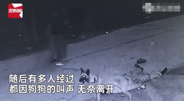 主人醉倒路边宠物狗忠心死守身旁!连声吼叫求救,路人却反被吓跑 全球新闻风头榜 第4张