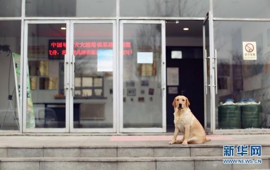 新科技导盲将让导盲犬渐隐?情感心理咨询难取代四川省视障协会成