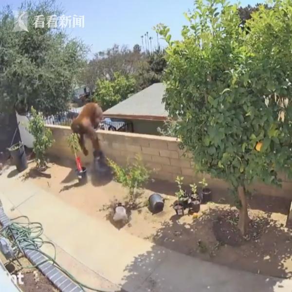 眼看宠物狗要被抓走 美国17岁女孩一把将熊推下墙头 全球新闻风头榜 第1张