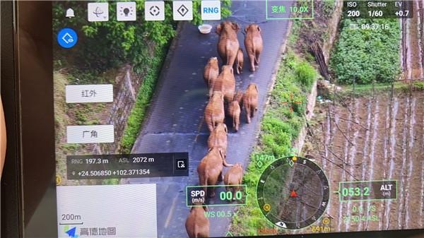 日本媒体花30分钟讲大象北迁 全球新闻风头榜 第1张
