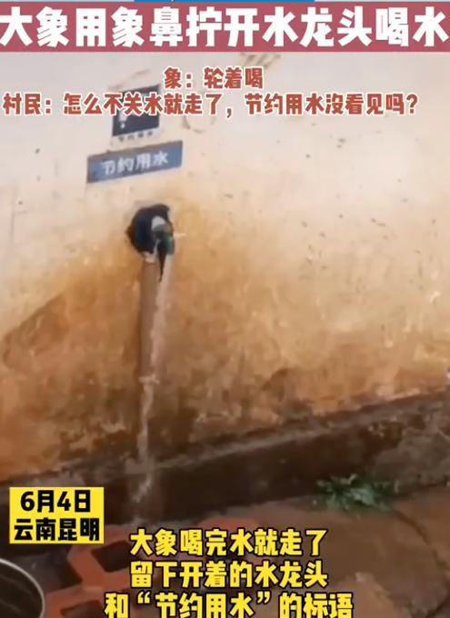 云南象群进村民家,拧开水龙头轮流喝水!村民笑称:咋不关水就走了? 全球新闻风头榜 第3张
