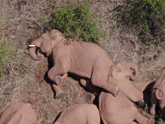 北迁象群在玉溪易门县十街乡活动,离群独象距象群约12公里 全球新闻风头榜 第3张