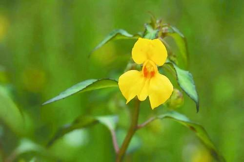 成都有一级重点保护植物15种
