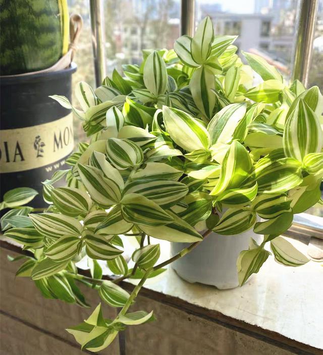 花卉,28种耐阴花,没光也能开爆盆,养在家里超有范儿