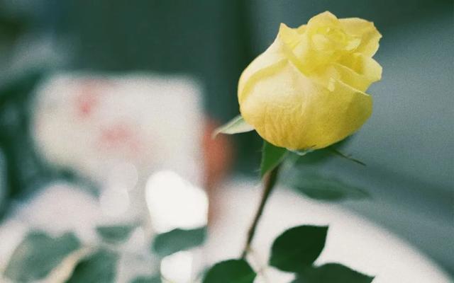 唯美爱情短句,6首唯美爱情古诗词:此生愿与君白首,不负花开不负卿